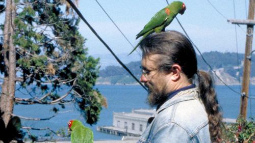 wild parrots1