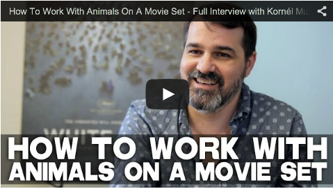 How To Work With Animals On A Movie Set - Full Interview with Kornél Mundruczó of WHITE GOD_Hungarian_Director_Shelter_Dogs_Budapest